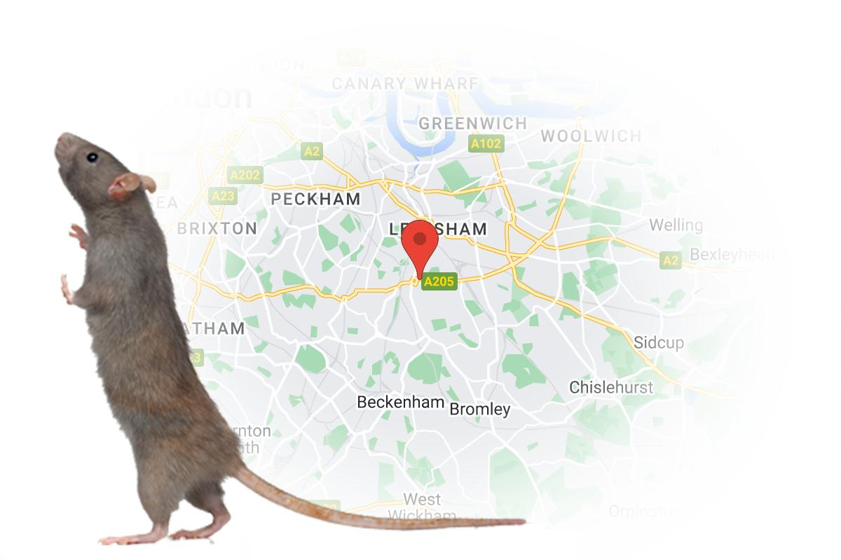 Catford 24 hour Pest Control