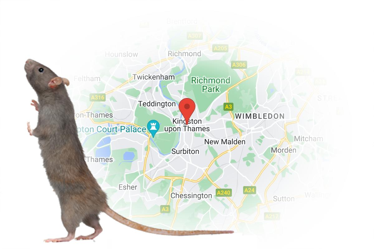 Emergency Pest Control Kingston upon Thames
