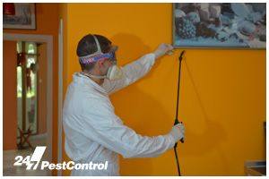 Local Pest Control Services - 24/7 Pest Control