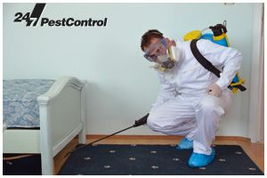 Local Pest Control Expert