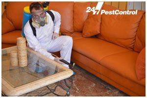 Excellent Local Pest Control Services
